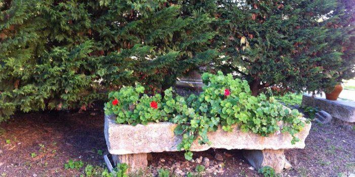 Auge Provençale dans le parc de nos gîtes - LA GUYANNE GIENS
